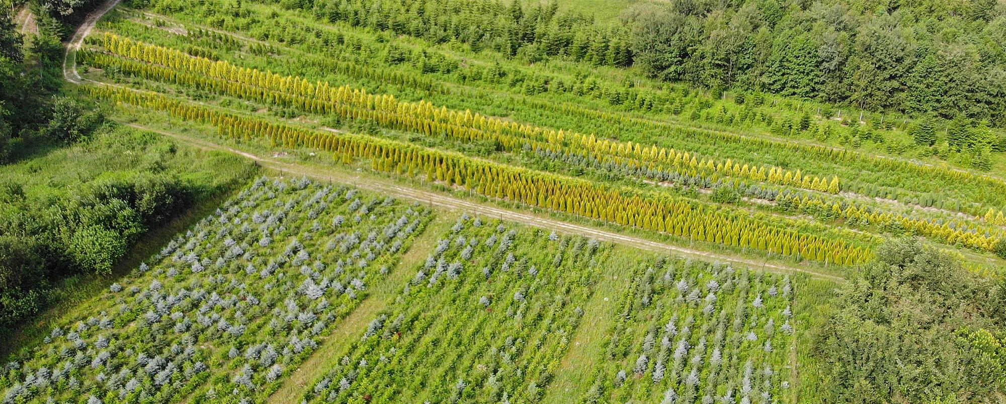 Produkcja drzew ozdobnych